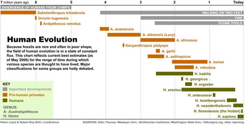 Hominid Evolution Timeline Origins - Hindupedia, ...